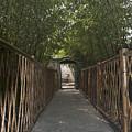 0171- Bamboo Walkway by David Lange