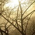 02 Foggy Sunday Sunrise by Michael Frank Jr