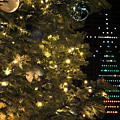 02 Xmas Trees At Canalside And Seneca One Tower Dec2015 by Michael Frank Jr