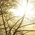 03 Foggy Sunday Sunrise by Michael Frank Jr