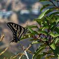 0518- Butterfly by David Lange