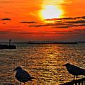 06 Sunset Series by Michael Frank Jr
