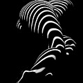 0774-ar Zebra Striped Figure Of A Large Woman Fine Art Photograph By Chris Maher by Chris Maher