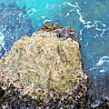 Sea Rocks by F Schiele