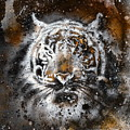 Tiger Collage On Color Abstract  Background  Rust Structure Wildlife Animals by Jozef Klopacka