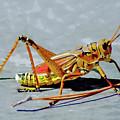 15- Lubber Grasshopper by Joseph Keane