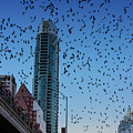 1.5 Million Mexican Free-tail Bats Overtake The Austin Skyline As They Exit The Congress Avenue Bridge by Austin Welcome Center