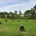 9 Ladies Stone Circle, Stanton Moor, Peak District National Park by Dave Porter