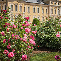 A Beautiful Rose Bush Castle Park 1 by Valdis Veinbergs