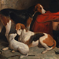 A Couple Of Foxhounds With A Terrier - The Property Of Lord Henry Bentinck  by Mountain Dreams