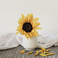 Sunshine In A Cup by Kim Hojnacki