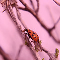 A Ladybug   by Jeff Swan