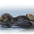 A Mama Sea Otter And Her Babe by Sandra O'Toole