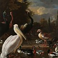 A Pelican And Other Birds Near A Pool, Known As The Floating Feather, Melchior D Hondecoeter, by Melchior d Hondecoeter