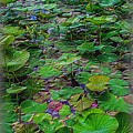 A Pretty Pond Full Of Lily Pads At A Water Temple In Bali. by Mark Sellers