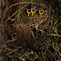 A Visit To The Nest by Damon Calderwood