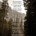 A Walk Among The Trees by David Martin