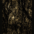 Abstract Gold And Black Texture by John Stephens
