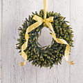 Advents Wreath by U Schade