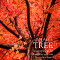 Advice From A Tree by Teri Virbickis