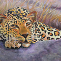 African Leopard by Katy Widger