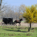 Amish Buggy Late Fall by David Arment