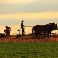 Amish Farmer by Lou Ford