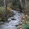 An Autumn Stream by Jeff Swan