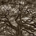 Angel Oak Live Oak Tree by Dustin K Ryan