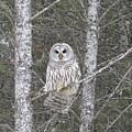 Angel Owl by Bonnie-Lou Ferris