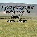 Ansel Adams Quote by Tony Murtagh