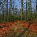 Appalachian Trail In Maryland by Raymond Salani III