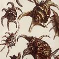 Aquatic Animals - Conch - Shells - Snails by Art Makes Happy