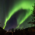 Aurora Borealis, Northern Lights In Denali National Park by Brenda Jacobs
