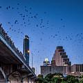 Austin Bat Watch by Tod and Cynthia Grubbs