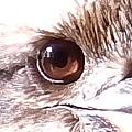 Australia - The Eye Of The Kookaburra by Jeffrey Shaw