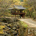 Autumn At Seonamsa by Michele Burgess