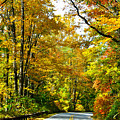 Autumn Drive No.2 by Lydia Holly
