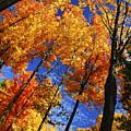 Autumn Forest by Elena Elisseeva