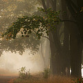 Autumn by Fproject - Przemyslaw Kruk