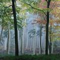 Autumn Frame by Ceri Jones