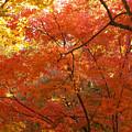 Autumn Gold by Carol Groenen
