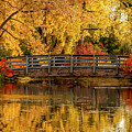 Autumn In The Park by Teri Virbickis