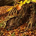 Autumn by Jacek Tomczak