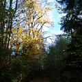 Autumn by Ken Day