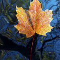 Autumn Leaf On The Water by Michal Boubin