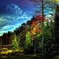 Autumn Light by David Patterson