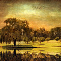 Autumns Golden Mirror by Jessica Jenney