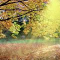 Autumn Morning by Alex Lim