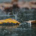 Autumn Rain by Shay Weiss